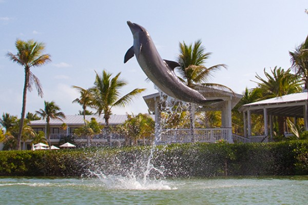 Dolphin Deck